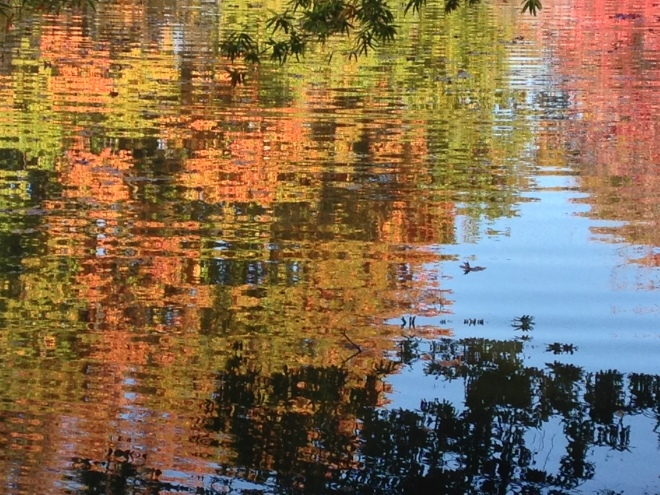 I'm fascinated by reflections on the water. Knight Park