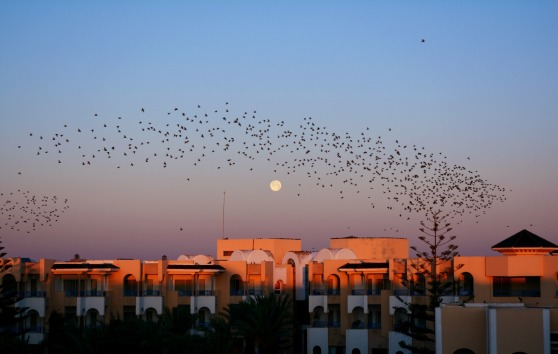 full_moon_at_dawn_featuring_birds
