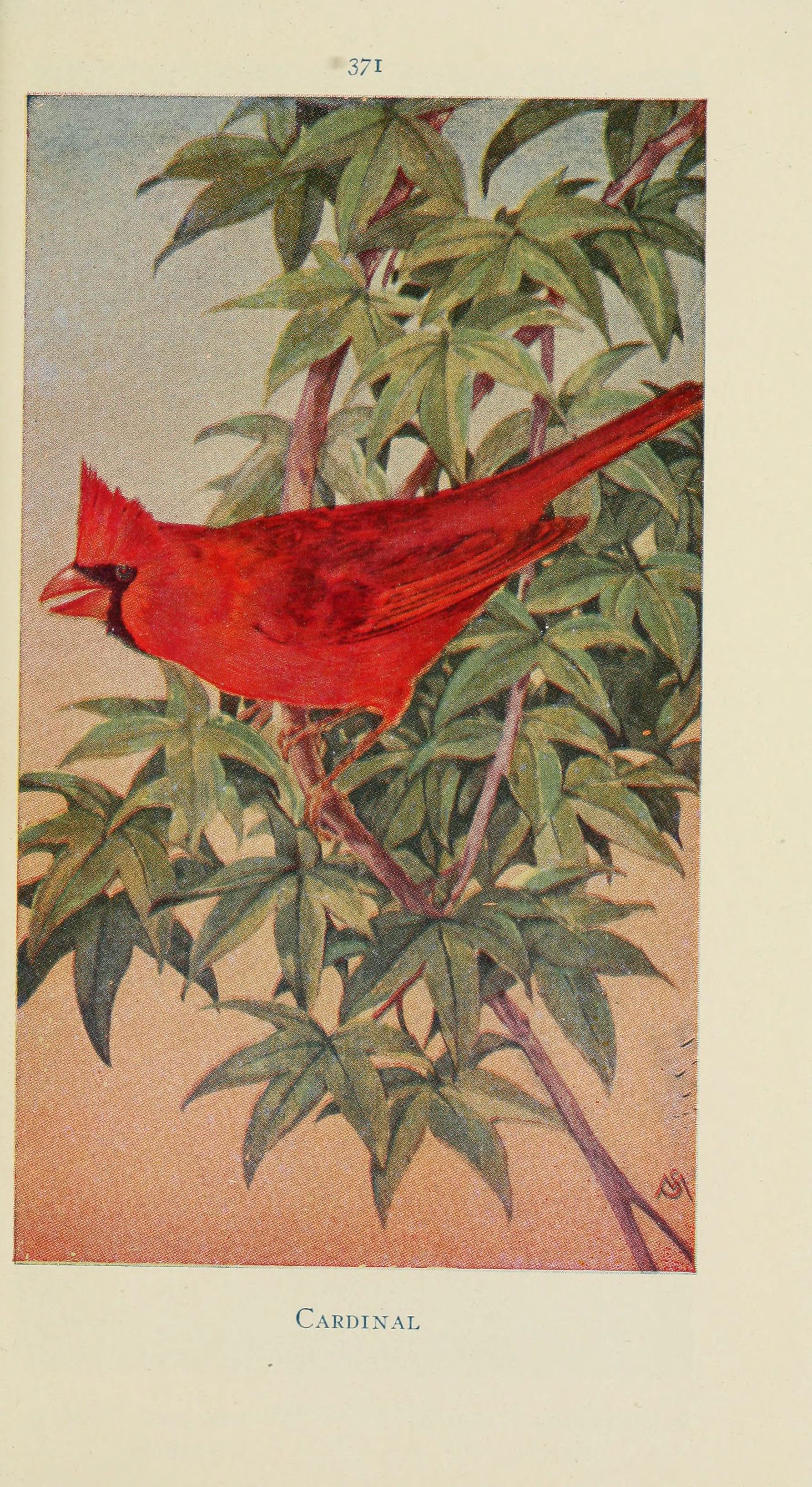 field_book_of_wild_birds_and_their_music_6260628154