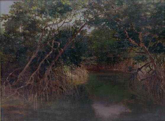 mangrove_swamp_wikstrom_1902