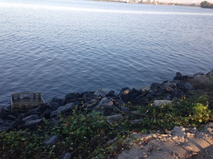 Delaware River from Red Bank Battlefield