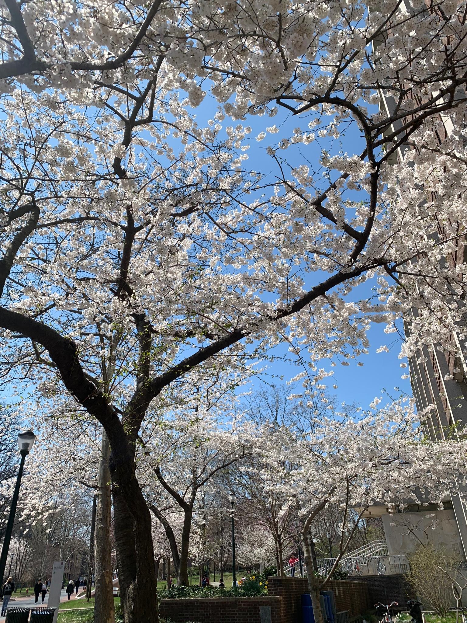 Spring, University of Pennsylvania