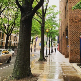Walking to Jefferson Hospital on a cold, rainy May day