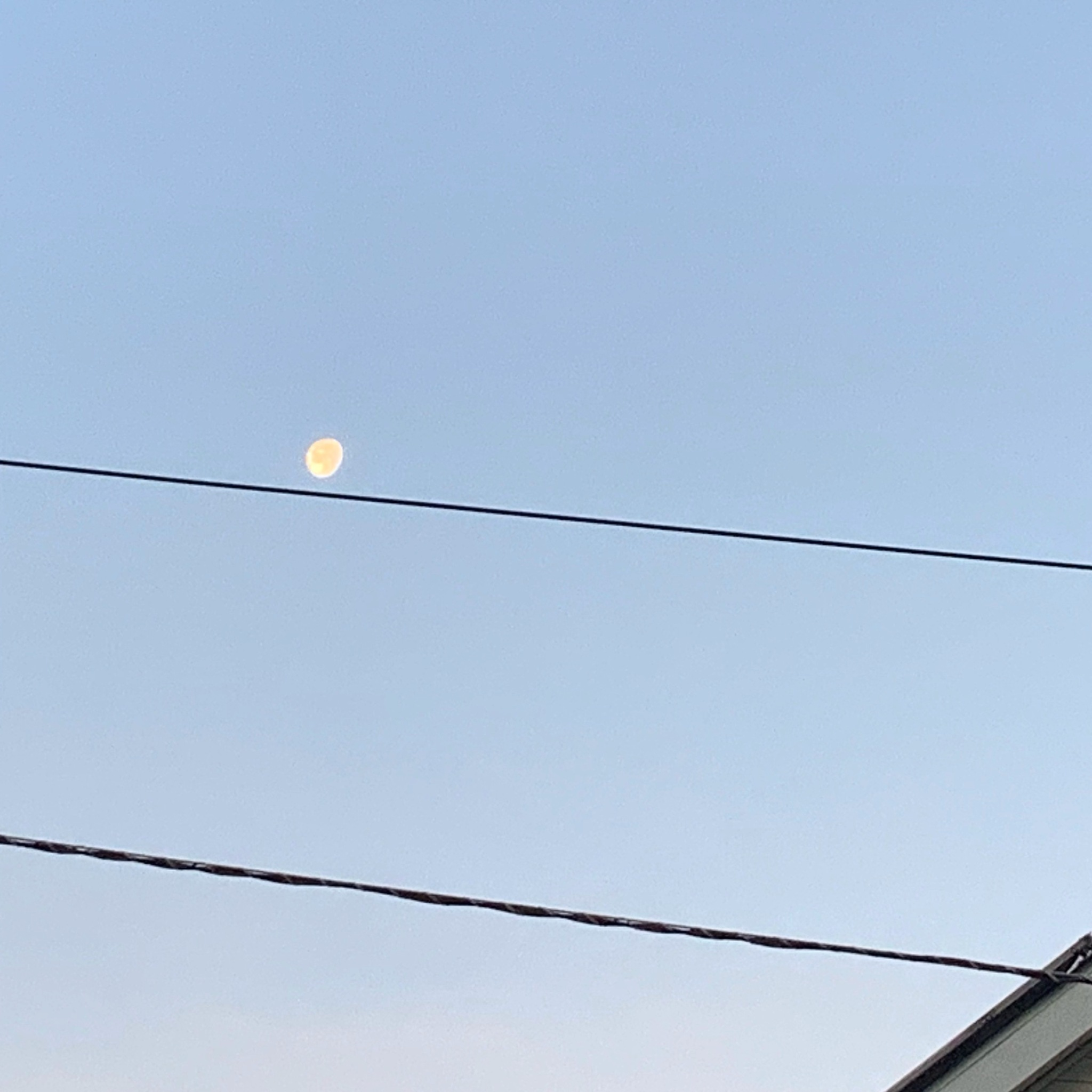 Morning Moon Does Her High Wire Act