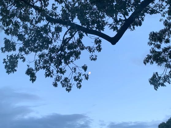 Morning Moon, June 2019, Merril D. Smith