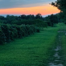 Sunset at William Heritage Vineyards July 2019