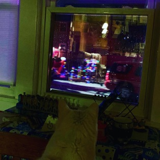 Hanukkah Cat watching Santa drive by